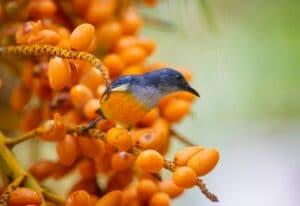 Birdwatching in the Spring Berries