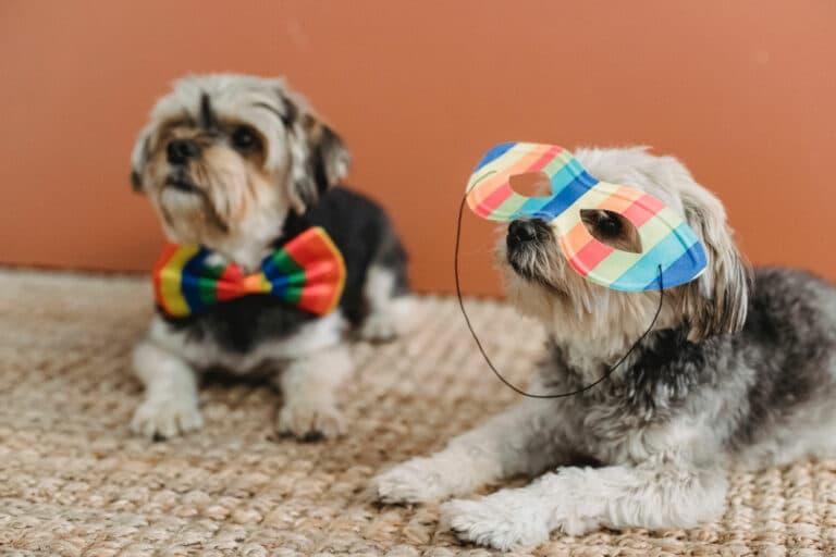 Fun Dog Costumes for a Dog Fashion Show