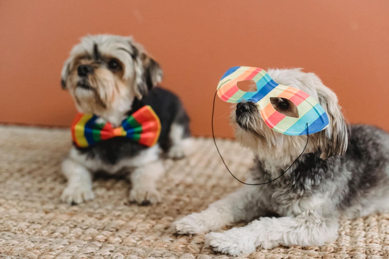 Making Doggie Dates Fun: The Fashion Show!